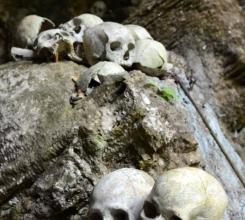 Skulls everywhere 15421686866[H]