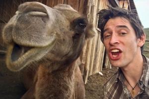 Camelmike