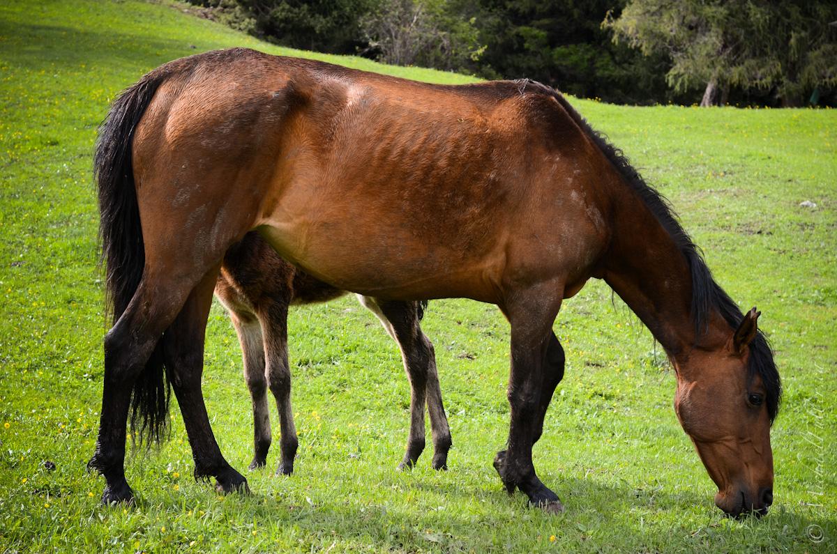 Eight-legged horse