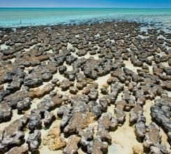 Stromatolites 3191095756[H]