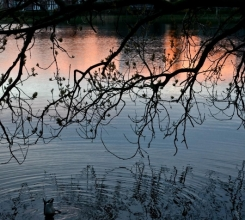 Duck Pond Sunset 18834346443[H]