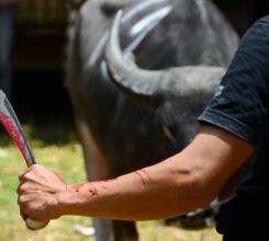 Indonesia - Anticipation Man vs Bull 15566789681[H]