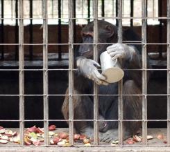 Zambia - Bad monkeys 818428988[H]