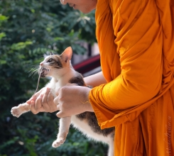 Thailand - Buddhist Cat