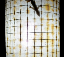 Indonesia - Gecko on a lamp 15545846419[H]