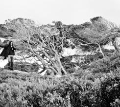 Australia - Skeletal Trees 7962411712[H]