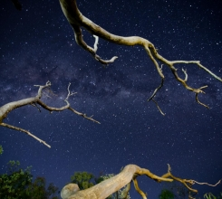 Australia - Stars and Branches 7521184000[H]