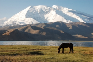 China - Horse on Karakul Lake 2720735297[H]