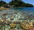 Togean coral panorama