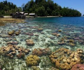 Togean coral panorama