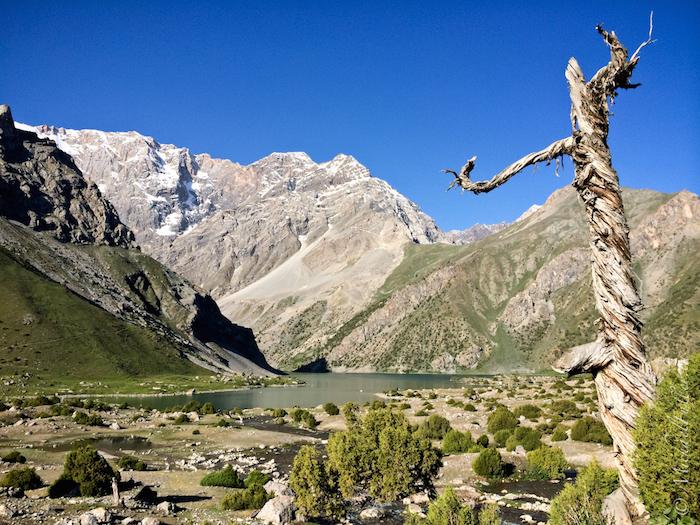 Gnarled trees grow in this alpine region of Tajikistan