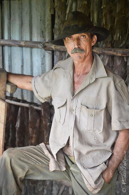 Peppicio the Tobacco farmer