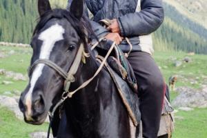 Jailoo Cowboy