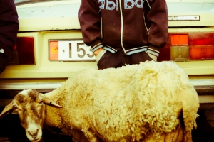 A boy shivers behind his family's Lada, left to sell the only animal they've brought. Note his authentic 'Abibas' shirt.