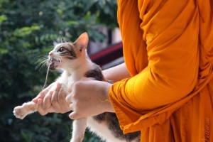 Buddhist Cat 6580606167[H]