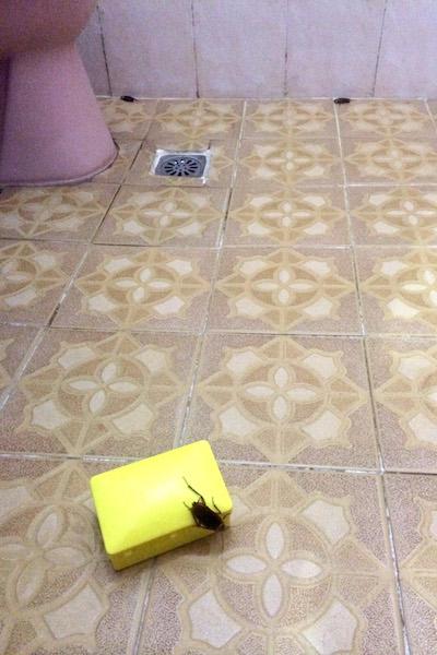 Indonesia bathroom cockroaches