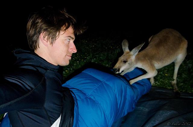 Kangaroo disrupts myke's sleep